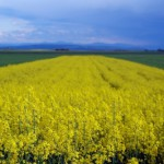 Bioenergie: Zwischen Welthunger und Tankstellenfrust