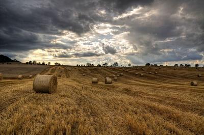 Klimawandel Landwirtschaft