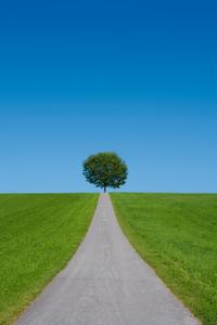 Erneuerbare Energien Verkehrswende Straße Baum