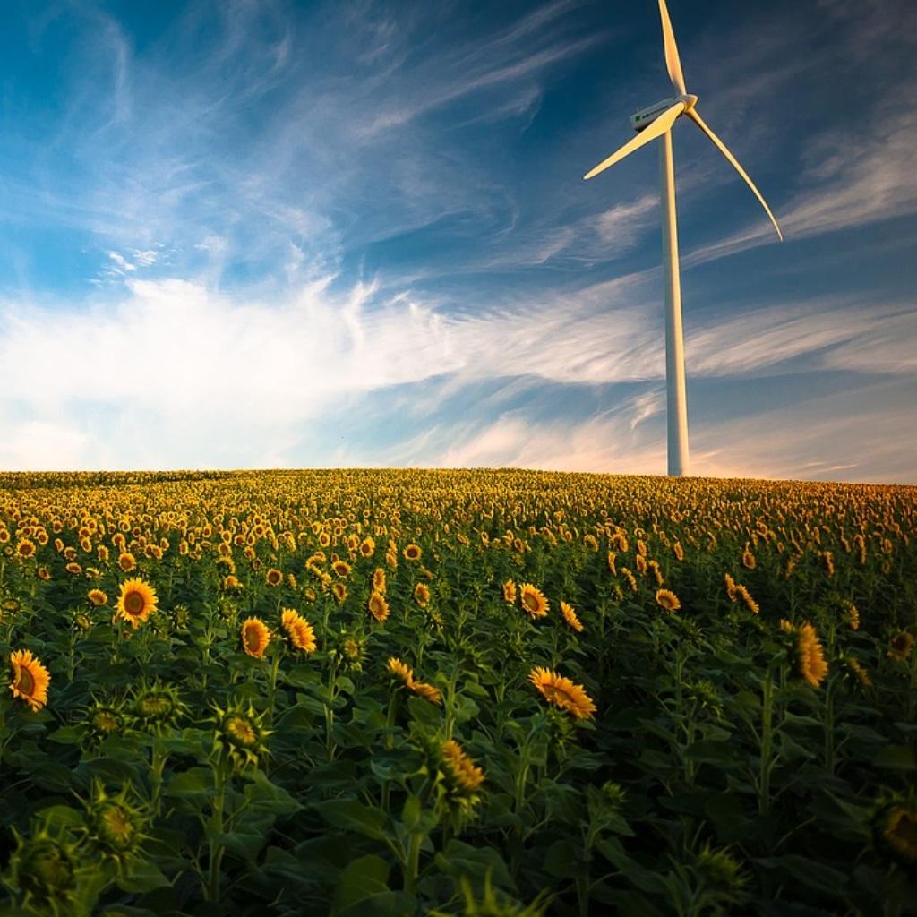 Erneuerbare Energien Windkraft