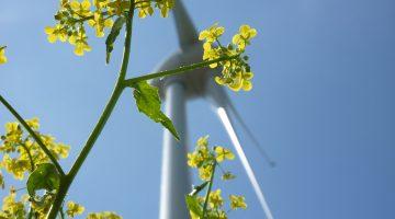 Windkraft,Windenergie,Windstrom,Ökostrom,Erneuerbare Energien